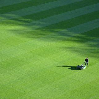 March 19  Fresh Cut Green Grass