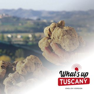 The white gold of the Tuscan hills - Ep. 54