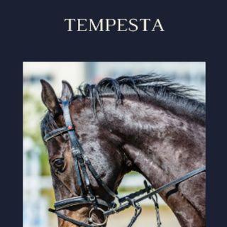 TEMPESTA 6/6 Part.