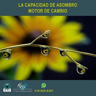 NUESTRO OXÍGENO Capacidad de asombro motor de cambio - Dra. Olga Lucía Hoyos