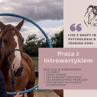 LIVE 2: Praca z Introwertykami