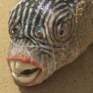 84 - Come comunicano i pesci