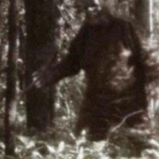 Psychology of Bigfoot