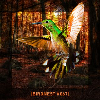 BIRDNEST #067 | The Autumn Inside | Podcast by The Lahar