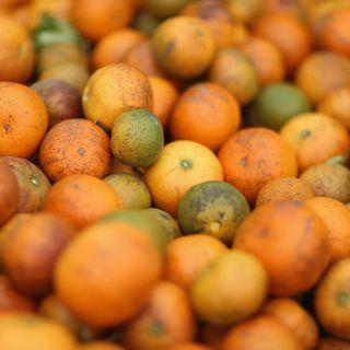 Jude Grosser, citrus greening
