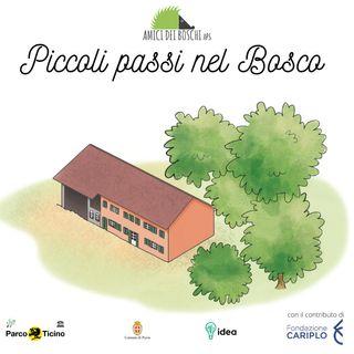 Piccoli passi nel Bosco