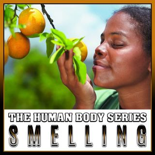Smell (The Human Body Series)