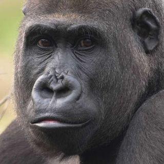 Los Gorilas (Voz de María)