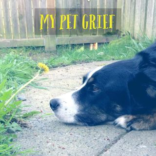 My Pet Grief