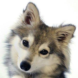 Seja você também um Encantador de Cães!Viva em harmonia com seu cão ou cães,seja O Lider da Matilha!