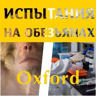 Испытания на обезьянах. Oxford.