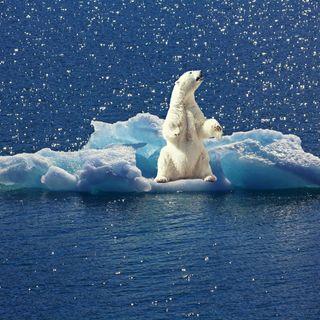 por qué TODOS deberíamos ser ecologistas y cómo empezar a serlo
