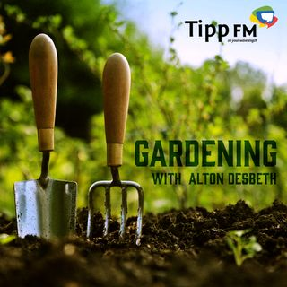 Alton Desbeth talks about Gardening