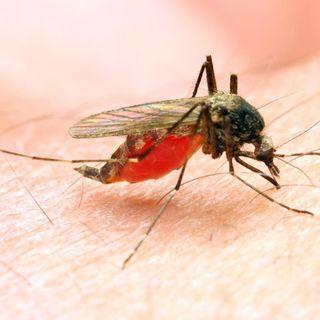 Africana: prospettive per un vaccino contro la malaria