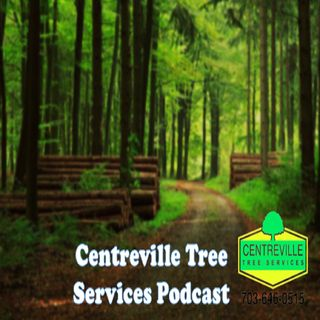 Centreville Tree Services