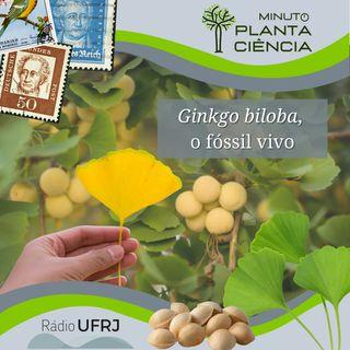Minuto PlantaCiência - Ep. 15 - Ginkgo biloba, o fóssil vivo (Rádio UFRJ)