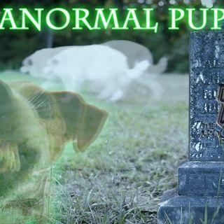 Paranormal Puppies episode 16