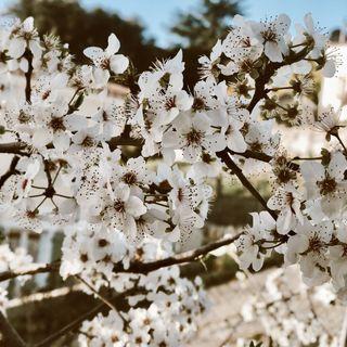 Épisode 10 | Vive le printemps ⚘ ❁
