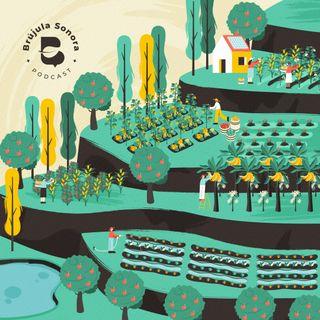 Ep. 9 Repensar los sistemas alimentarios, más allá del clima