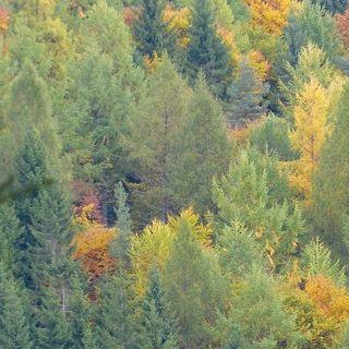 Foreste europee in crescita ma il loro futuro è incerto