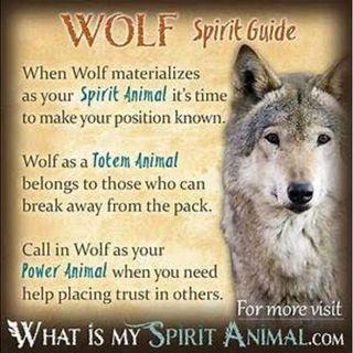 Walk on the wild side with Wolfspirit