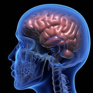 Joel Michael Singer Neuro Doctor