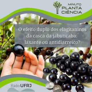 Minuto PlantaCiência - Ep. 21 - O efeito duplo dos elagitaninos da casca da jabuticaba: laxante ou antidiarreico (Rádio UFRJ)