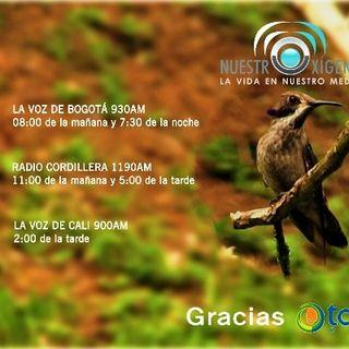 NUESTRO OXÍGENO Nuestros oyentes expresan su amor por la naturaleza - Dorella Valverde