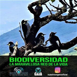 NUESTRO OXÍGENO Biodiversidad y la maravillosa red de la vida