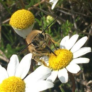 La biodiversidad para un ecólogo, con Oscar Godoy   Oikos #35