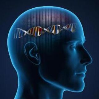 Memetic vs Genetic