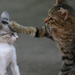 """Nu skall vi vara """"nuister"""". Framtiden tassar i kattens fotspår & Maskinerna tar över"""