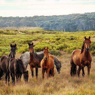 Horses in an Apocalypse!