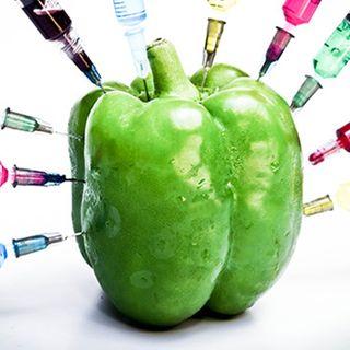 Episode 48 - GMOs