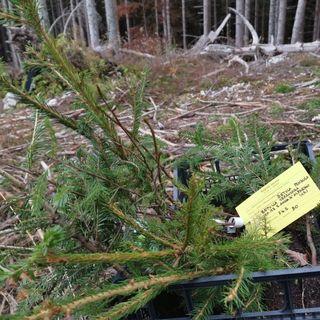 """Vaia, 2 anni dopo: sul Mosciagh il ripristino sperimentale dei boschi """"copia"""" la natura"""