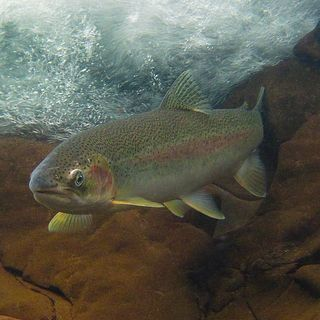NWWC March 17, Hour 2: Jon McMillan delivers the steelhead State of the Union address