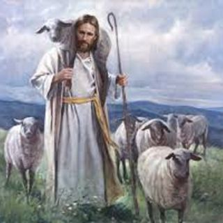 Greatest Lie (part 2) Sheep Can Go Astray