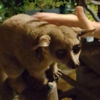 Rädd för rabies
