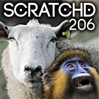 206 - Sheep.com and The Sexist Diaper Monkey