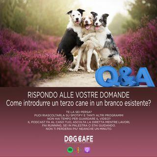 #050 - RISPONDO ALLE VOSTRE DOMANDE - Come introdurre un terzo cane in un branco esistente?