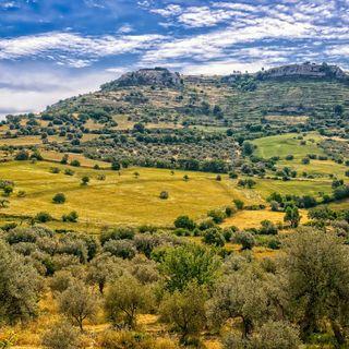 Giglio Di Mare:Flora Spiagge Sicilia