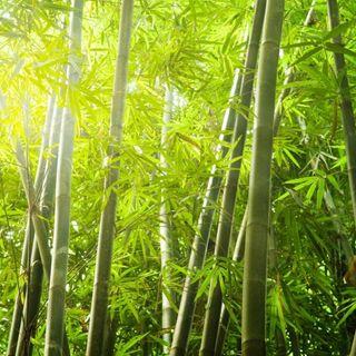 Lilibereu, la ragazza del bambù