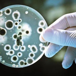 Actuación de biotecnología en un universo de servicios y productos