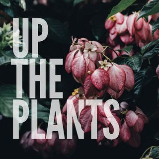 Up The Plants: episode 1- a lot about us