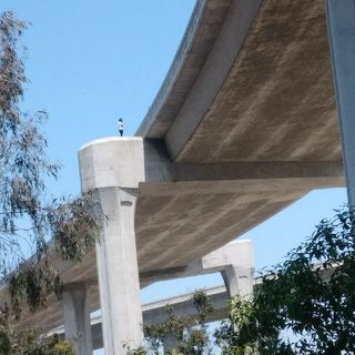 Live from Los Angeles a Man Is Standing on The side of The 110 Freeway threatening to Jump.