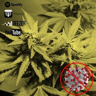 Capítulo 25: En tiempos de pandemia, el cannabis mi alma llena