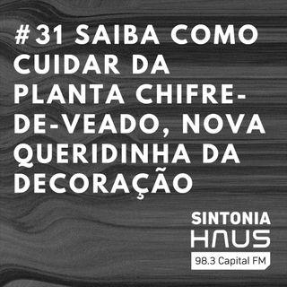 Chifre-de-veado: como cuidar da planta que é sensação nos projetos de decoração    Sintonia HAUS #31