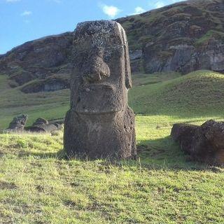 Isola di Pasqua, storia di un collasso ecologico - La Nazione delle Piante