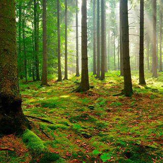 Due passi nel bosco