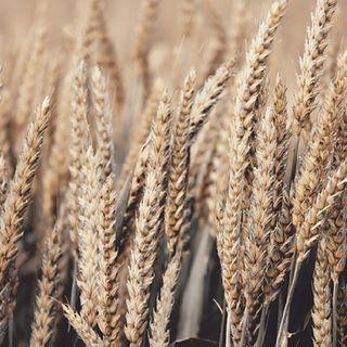 OGM: Perché Abbiamo Paura?